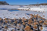 Wetland in winter. Sheguindah. <br /> Manitoulin Island<br /> Ontario<br /> Canada