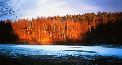 CZECH REPUBLIC BOHEMIA MELNIK DEC99 - A forest is illuminated by the setting winter sun. ..jre/Photo by Jiri Rezac. . © Jiri Rezac 1999. . Tel:   +44 (0) 7050 110 417. Email: info@jirirezac.com. Web:   www.jirirezac.com