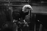 L'aquila Olimpia, mascotte della Lazio durante la partita di campionato Lazio vs Napoli. Stadio Olimpico. 9 febbraio 2013. Christian Mantuano / Oneshot