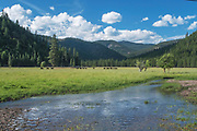 Kettle Rock, Wagyu Cattle, Hosselkus Creek, Genesee Valley, Spring, Green Pastures, Blue Sky, White Puffy Clouds, Cumulus Clouds