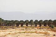Palm Tree Plantation, Israel, Aravah Desert
