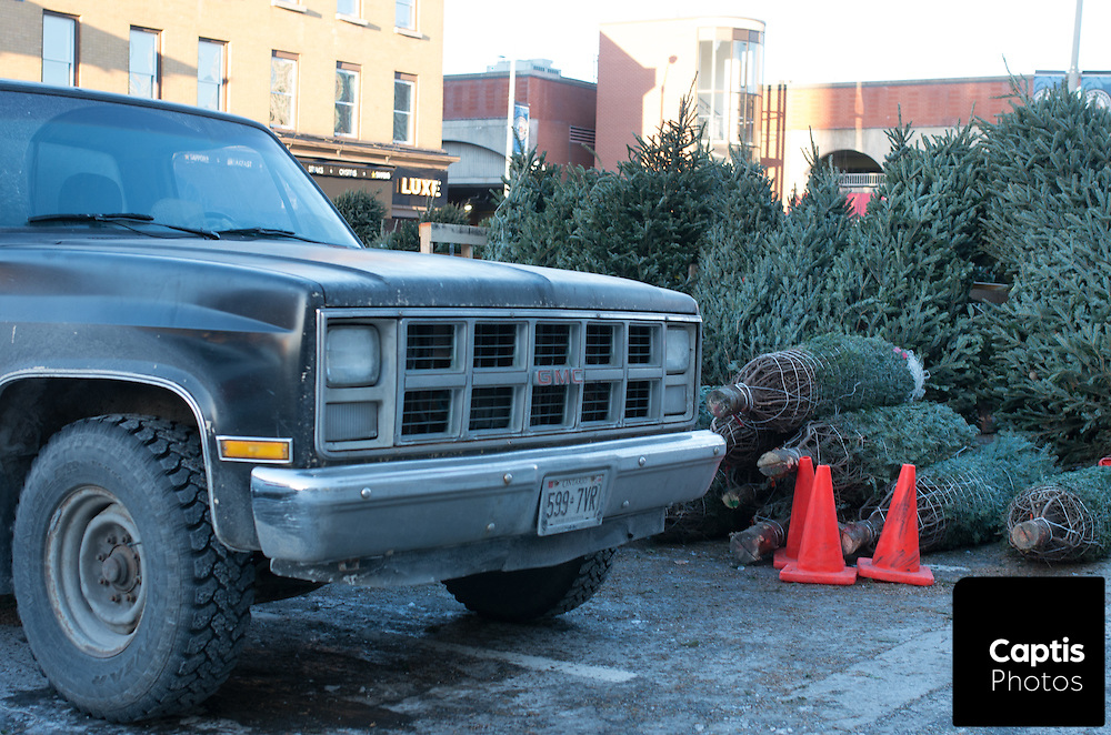 Christmas trees for sale in the ByWard Market. December 7, 2014.