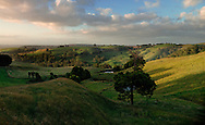 Gippsland grazing land