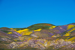 Superbloom at  Temblor Range at the Carrizo Plain in San Luis Obispo County. <br /> <br /> This is a telephoto landscape, telephoto landscapes are short on fine detail because of the long distance involved and heat waves.