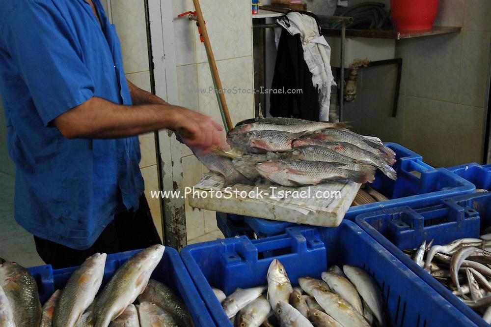 cleaning fish at a fish market