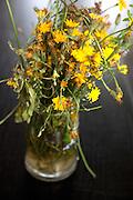 Artistic wilting dandelion bouquet. Zawady Central Poland