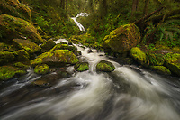 Bunch Creek Falls and lush greens in the Quinault Rainforest in Olympic National Park, Washington