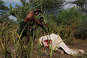 A man spears to death a young camel as part of a traditional initiation ceremony into adulthood of men aged between 18 and 20 in a Pokot community of herdsmen in Baringo County, Kenya, October 2, 2018.