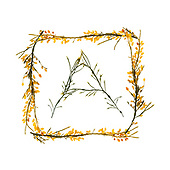 Seaweed Alphabets