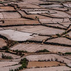 Garlic Cultivation in Ly Son Island (Garlic Island), Quảng Ngãi Province