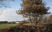 Autumn landscape with brown leaves of hedgerow bushes and white detached cottage, Butley, Suffolk, England, UK