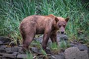 What a sheepish little cub.