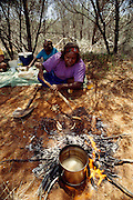 Kitty Miller prepares witchetty grubs by cooking them in the hot ashes at the edge of the campfire outside Alice Springs in Central Australia. Grubs are high in protein and were a traditional meal of the areas' Aboriginal peoples?all but forgotten in the face of modern supermarket foodstuffs. Witchetty grubs are the larvae of cossid moths. The large white worms live in tunnels in the ground where they feed on sap from the roots of a species of Acacia, commonly known as Wichetty Bush. Image from the book project Man Eating Bugs: The Art and Science of Eating Insects.