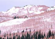 Wasatch Mts. Winter Portrait, Utah