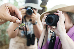 People photographing green darner dragonfly with magnifying glass,  Mitchell Lake Audubon Center, San Antonio, Texas, USA.