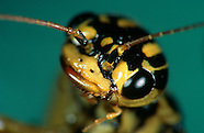 FEATURE: Death on the Windshield - Insect Portraits