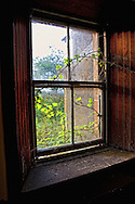 In an old cottage in Scotland I came across this example of nature starting to take back the land.