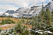 """Snow dusts evergreen trees above Logan Pass, in Glacier National Park, Montana. Since 1932, Canada and USA have shared Waterton-Glacier International Peace Park, which UNESCO declared a World Heritage Site (1995) containing two Biosphere Reserves (1976). Rocks in the park are primarily sedimentary layers deposited in shallow seas over 1.6 billion to 800 million years ago. During the tectonic formation of the Rocky Mountains 170 million years ago, the Lewis Overthrust displaced these old rocks over newer Cretaceous age rocks. Glaciers carved spectacular U-shaped valleys and pyramidal peaks as recently as the Last Glacial Maximum (the last """"Ice Age"""" 25,000 to 13,000 years ago). Of the 150 glaciers existing in the mid 1800s, only 25 active glaciers remain in the park as of 2010, and all may disappear by 2020, say climate scientists."""