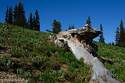 The tree trunk formed a distinctive component to the meadow landscape.  I would love to had seen this tree when it was alive.  It must have been a magnificient monarch.