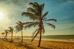 Coqueiros na Praia de Cumbuco localizada no município de Caucaia, a 30 km da capital, Fortaleza no estado do Ceará. FOTO: Jefferson Bernardes/ Agência Preview