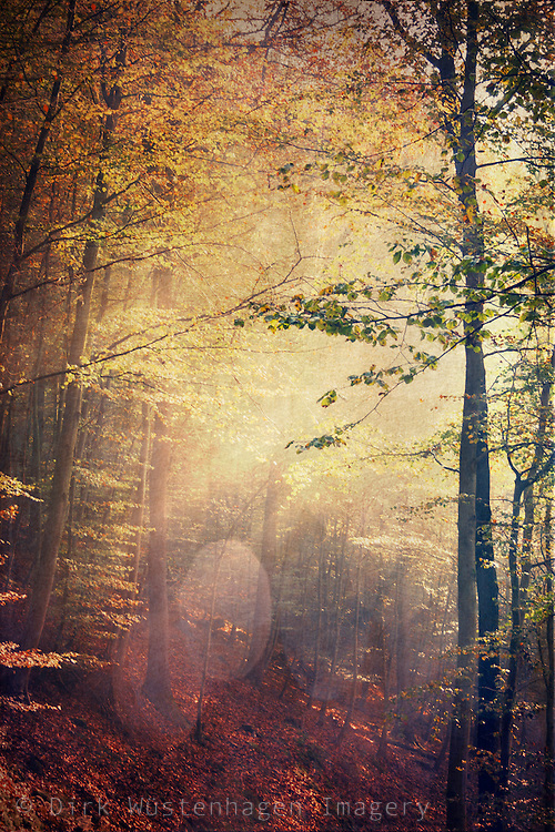 Autumnly forest scenery with light breaking through the foliage<br /> <br /> Society6 Prints: http://bit.ly/2DTGEq3