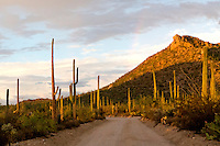 Traveling through Saguaro National Park West at sundown