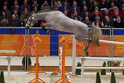 191 - E Adermie<br /> KWPN Hengstenkeuring - 's Hertogenbosch 2012<br /> © Dirk Caremans