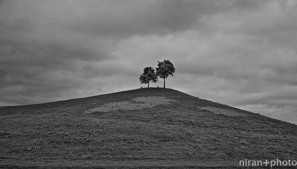 Twin Tree Hill