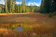 Takh Takh Meadow and Mt Adams in autumn, Gifford Pinchot National Forest, Cascade Mountain Range, Washington, USA