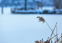 THEMENBILD - ein Schilfrohr mit gefrorenem See im Hintergrund aufgenommen am 28. Februar 2018, Zell am See, Österreich // a reed with frozen lake in the background on 2018/02/28, Zell am See, Austria. EXPA Pictures © 2018, PhotoCredit: EXPA/ Stefanie Oberhauser