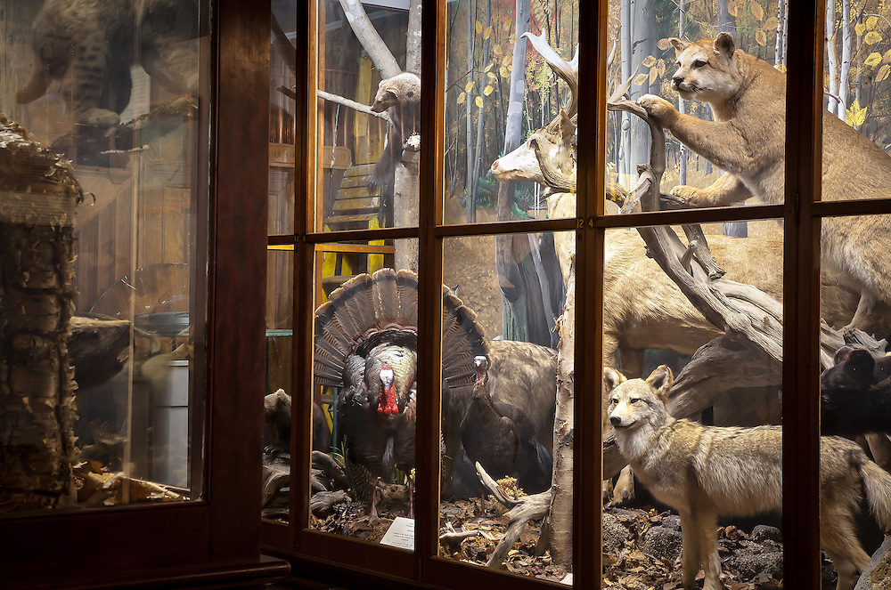 Display at the Fairbanks Museum & Planetarium in St. Johnsbury, Vermont.