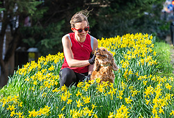 """© Licensed to London News Pictures. 23/02/2021. London, UK. Spring has Sprung. Olivia Lucas 31 enjoys the daffodils in the sunshine with her Cocker Spaniel, Groot this afternoon in Richmond, South West London as weather forecasters predict a warm and sunny week ahead with highs of 17c in the South East. Yesterday, Prime Minister Boris Jonson announced his """"Roadmap Map' out of Lockdown with a gradual easing of Covid-19 restrictions with shops, pubs and gyms to open by April, Rule of Six and schools back by March and nightlife back by June. Photo credit: Alex Lentati/LNP"""