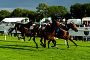The Detainee ridden by Trevor Whelan and trained by Neil Mulholland in the Kingstone Press Apple Handicap (Value Rater Racing Club Bath Summer Stayers Series Qualifier) (Class 5) race. Miss Latin ridden by Dylan Hodge and trained by David Simcock in the Kingstone Press Apple Handicap (Value Rater Racing Club Bath Summer Stayers Series Qualifier) (Class 5) race. Singing The Blues ridden by Daniel Muscutt and trained by Rod Millman in the Kingstone Press Apple Handicap (Value Rater Racing Club Bath Summer Stayers Series Qualifier) (Class 5) race.  - Ryan Hiscott/JMP - 17/08/2019 - PR - Bath Racecourse - Bath, England - Race Meeting at Bath Racecourse
