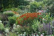 Italian Terrace, Alitex Greenhouse, Suffolk, July
