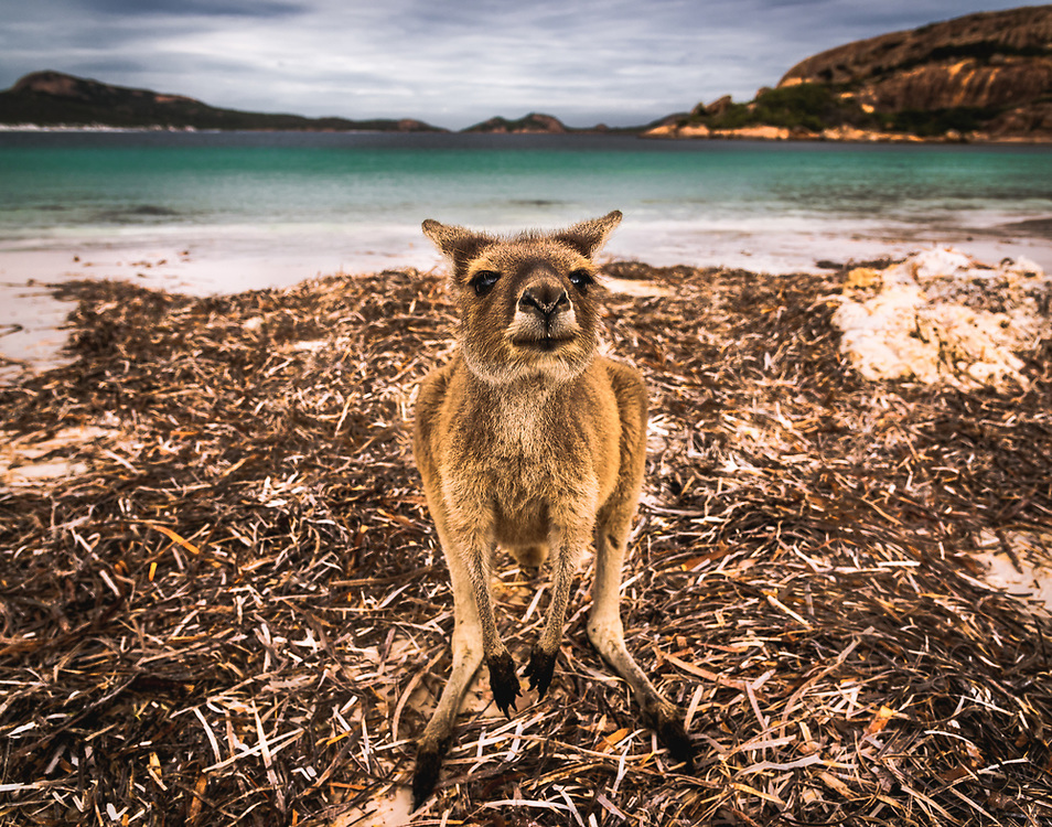 Le Grand Beach in Cape Le Grand National Park, Western Australia