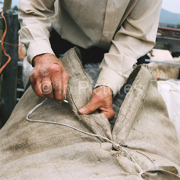 A hill farmer stitches the wool sheet containing Swaledale sheep fleece at Lodge Moor Pens, Nidderdale, North Yorkshire, UK. In Nidderdale a group of hill farmers walk up on the Moor together to gather their sheep as a group and then shear their sheep at Lodge Moor Pens.