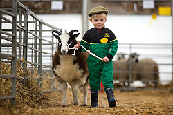 © Licensed to London News Pictures. 18/10/2015. Harrogate. 4 year old Corey Duddin gets his Jacobs lamb ready for the young handlers competition at The 13th annual Countryside Live event at Harrogate show ground in Yorkshire. Photo credit: Andrew McCaren/LNP