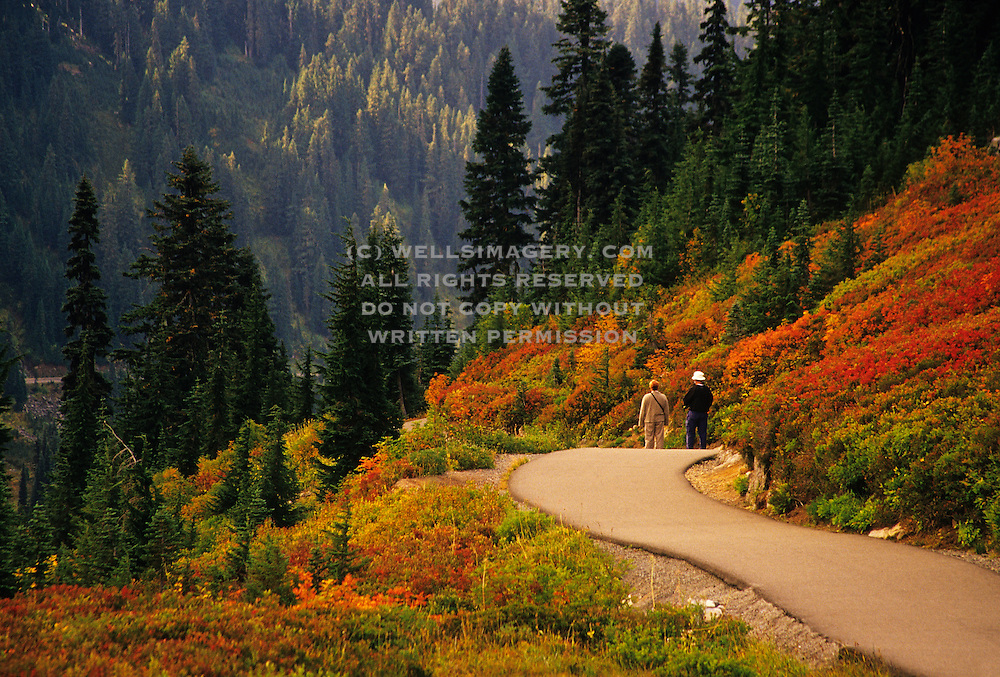 Image of hikers near Paradise at Mount Rainier National Park in the fall, Washington, Pacific Northwest, model released by Randy Wells