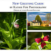 NEW! Greeting card designs<br /> 5x7, 100% Recycled Paper<br /> $5.00 each