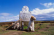 Fox Terrier at Fat Bessy's Cross, North Yorks Moors National Park .<br /> <br /> Visit our ENGLAND PHOTO COLLECTIONS for more photos to download or buy as wall art prints https://funkystock.photoshelter.com/gallery-collection/Pictures-Images-of-England-Photos-of-English-Historic-Landmark-Sites/C0000SnAAiGINuEQ