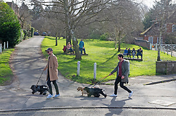 © Licensed to London News Pictures 20/02/2021.        Otford UK. Dog walkers in Otford Kent.  Warmer temperatures are expected all weekend with today set to be the hottest in three months. Photo credit:Grant Falvey/LNP