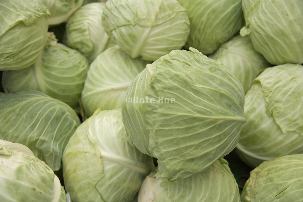 green vegetable cabbage close up
