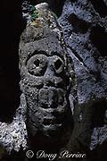 primitive stone carving, Cueva Arena,Los Haitises National Park, Samana, Dominican Republic ( Caribbean Sea )