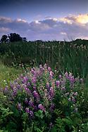 Sunset at the Arcata Marsh, Arcata, Humboldt County, CALIFORNIA