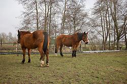 Old Horse Lodge - Laarne 2011<br /> © Dirk Caremans