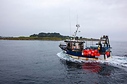 Fishing boat - fishing for lobster and crab near the Ile de Batz, Brittany, France