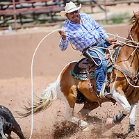 Tie-down roper Roy Begay reins in his horse as his lasso lands on the calf during the Gallup Inter-tribal Indian Ceremonial rodeo Friday at Red Rock Park.