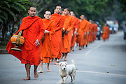 "11 MARCH 2013 - LUANG PRABANG, LAOS: A street dog accompanies a group of Buddhist monks on the morning tak bat in Luang Prabang. The ""Tak Bat"" is a daily ritual in most of Laos (and other Theravada Buddhist countries like Thailand and Cambodia). Monks leave their temples at dawn and walk silently through the streets and people put rice and other foodstuffs into their alms bowls. Luang Prabang, in northern Laos, is particularly well known for the morning ""tak bat"" because of the large number temples and monks in the city. Most mornings hundreds of monks go out to collect alms from people.    PHOTO BY JACK KURTZ"