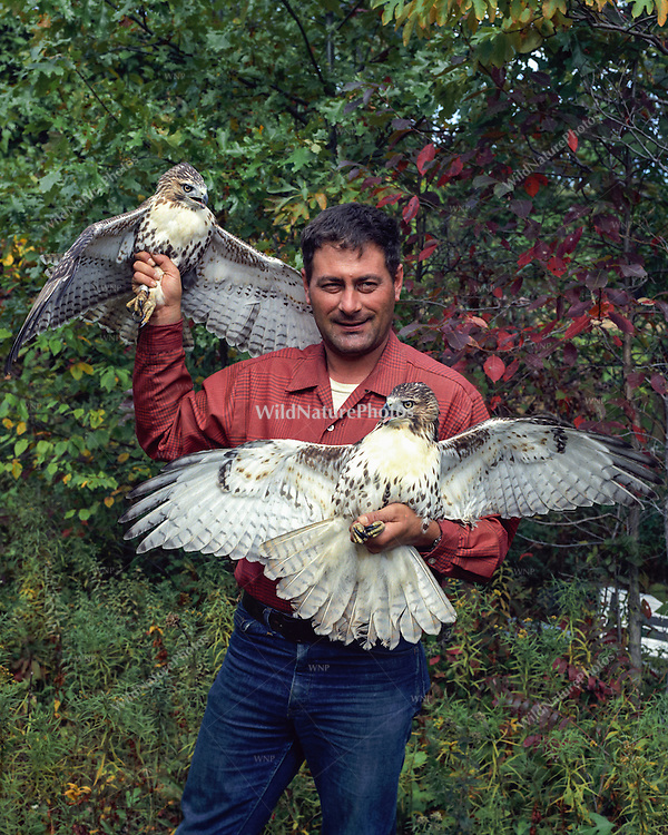 Ron Austing in his youth, holding a two Red-tailed Hawks