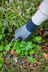 Gloves trial - weeding by hand